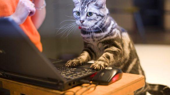 śmieszny kot gracz